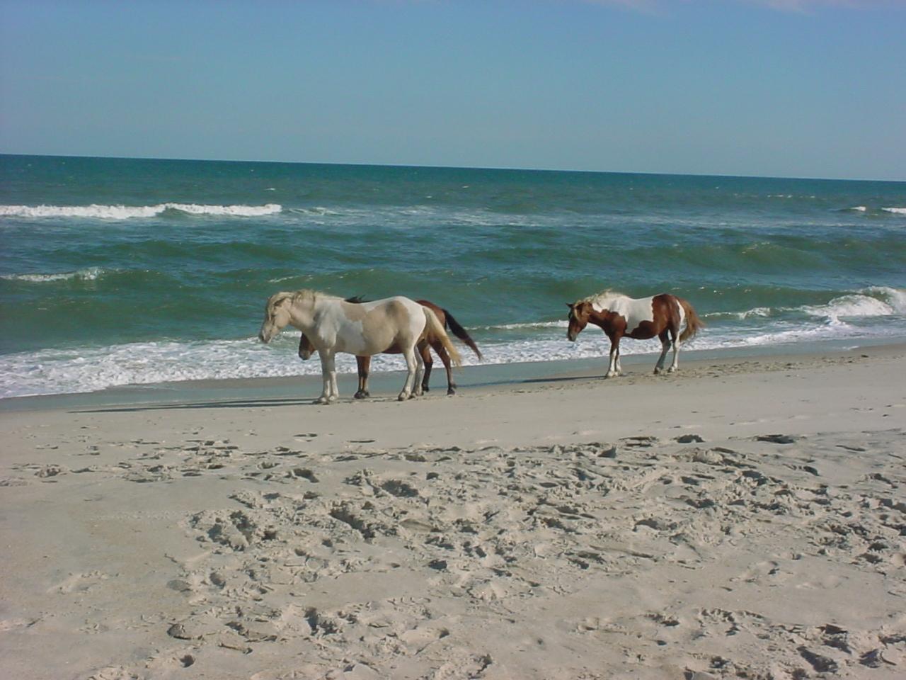 Chincoteague Virginia Beach